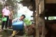 """Vốn tín dụng chính sách - """"Bà đỡ"""" xóa nghèo cho người dân vùng khó ở Cao Bằng"""