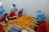 Tiền Giang có 129 doanh nghiệp sử dụng lao động người nước ngoài