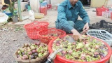 Lâm Đồng phát huy hiệu quả nguồn vốn cho vay giải quyết việc làm