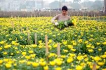 Ngành hoa, cây cảnh Thủ đô chưa phát huy hết tiềm năng, lợi thế