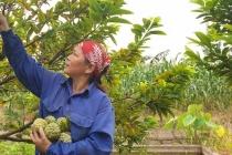 Hiệu quả giảm nghèo bền vững ở Quảng Ninh