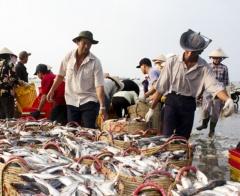 Bà Rịa – Vũng Tàu hỗ trợ bổ sung đối tượng đánh bắt hải sản gần bờ
