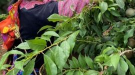 Shopee triển khai chương trình hỗ trợ xúc tiến tiêu thụ sản phẩm nông sản các địa phương