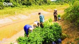 Trồng cây gỗ lớn ứng phó biến đổi khí hậu, góp phần ngăn đại dịch tiếp theo